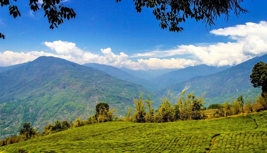 Photos of Temi Tea Garden by Baichung Bhutia