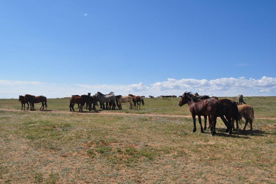 Mongolia adventures