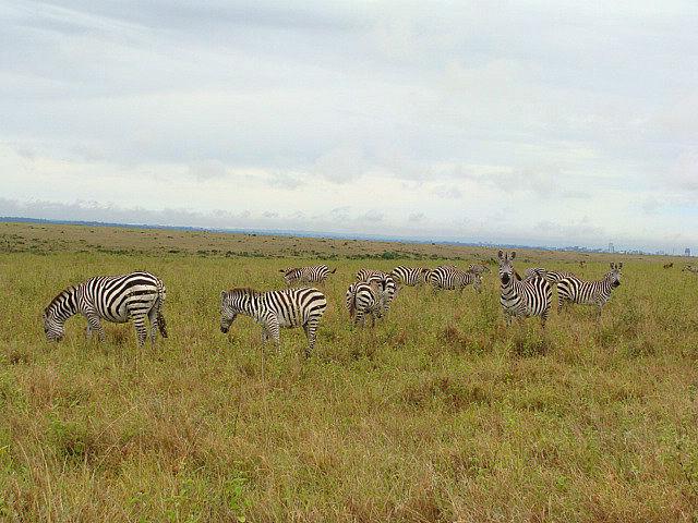 Book Hotels Before Traveling To Kenya