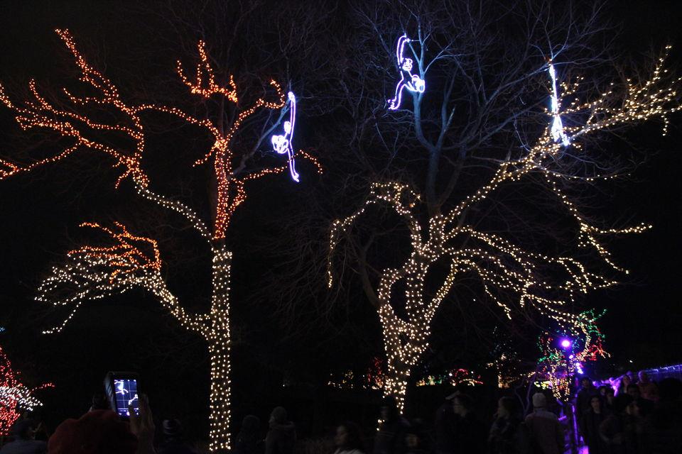 Lincoln Park Zoo Lights Festive Vibes By Kavita Tripoto