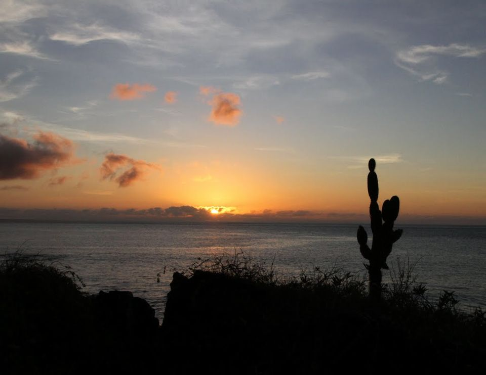 A Cruise to the Galapagos Islands