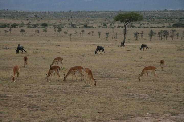 Amboseli National Park 3 Days 2 Nights From Nairobi