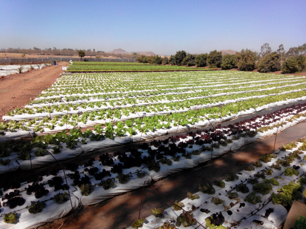 Farm Tour - What Is So Different About Green Tokri Farms?