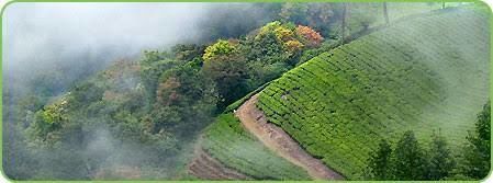 Hills Stations to Visit in Kerala