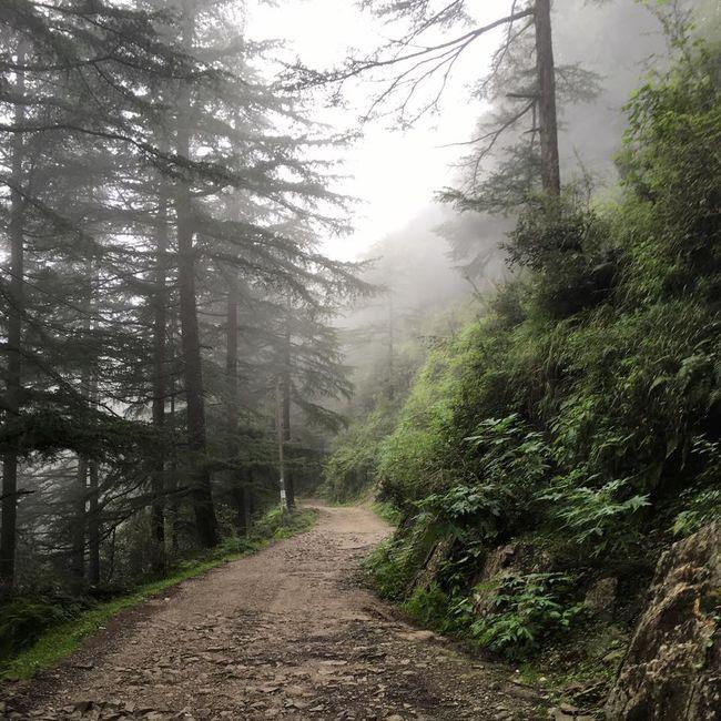 Dharamshala - Magic lies here
