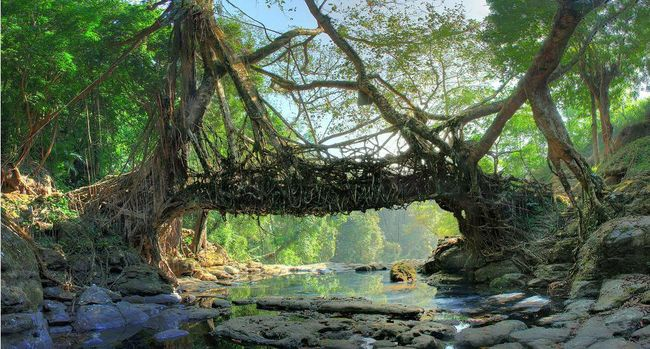 ... to Visit in Meghalaya, List of Tourist Spots in Meghalaya | Tripoto