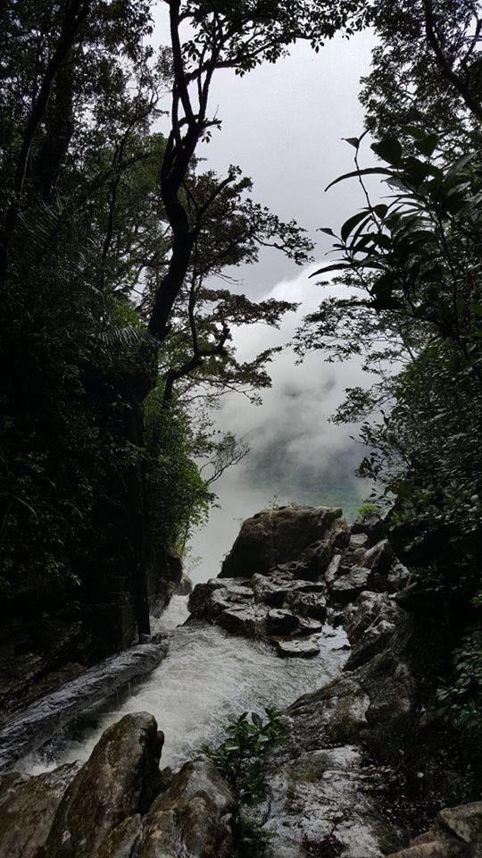 Amazing Agumbe