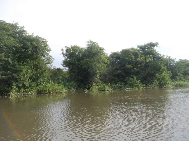 Ratargul Swap Forest: The Desi Amazon