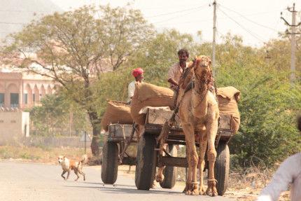 Traveling-high in Pushkar