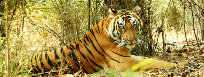 Wildlife of India has so much to bestow, not just Tigers!