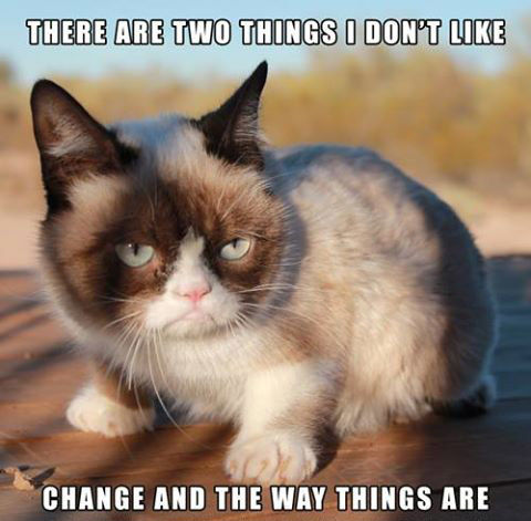 Frazzled Cat Meme