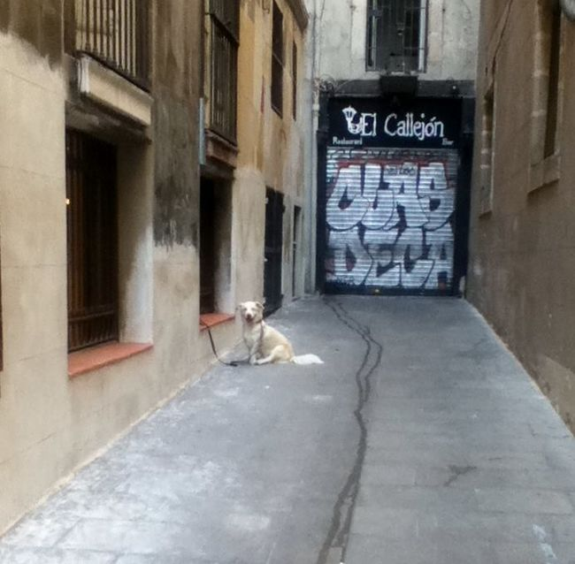 Fiesta, Siesta and Barcelona