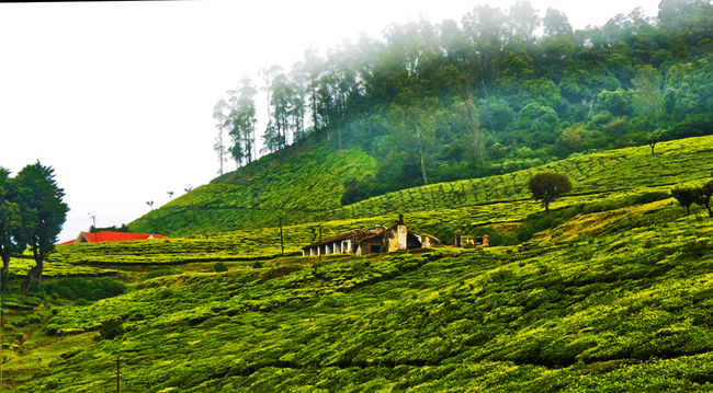 Ooty - Escape to Green Paradise
