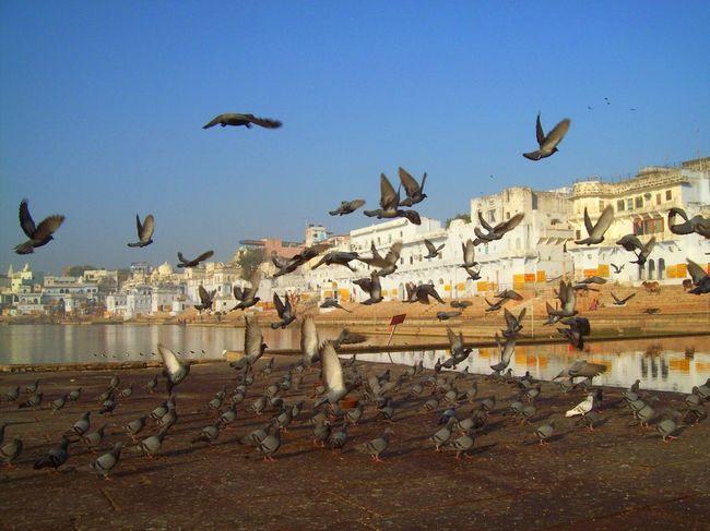 trip train journeys from delhi under hours