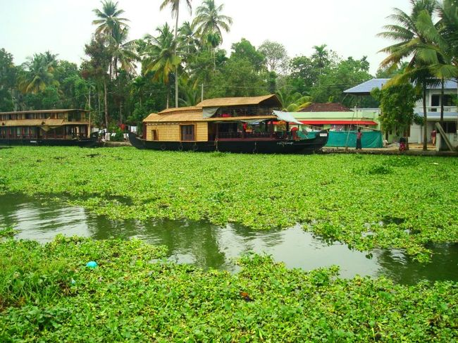 Boats, beaches, backwaters, books, beauty: Kerala trip