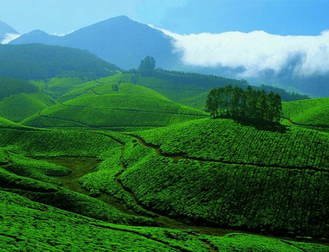 Munnar – Land with a green carpet