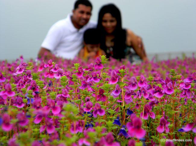 Kaas Plateau (Kaas Pathar) – The valley of Flowers – World Heritage Site
