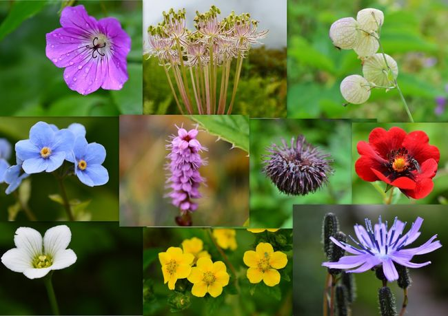 Trek to Valley of flowers- August 13th to 22nd, 2015