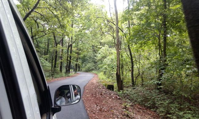 Into the Wild! The Road Trip to Yana and Jog Falls in Karnataka
