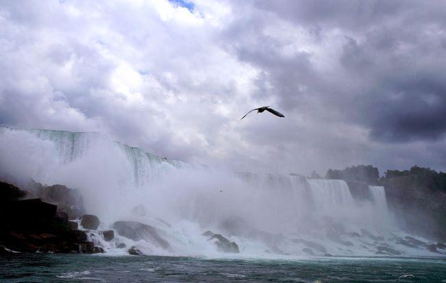 Roaring Niagara Falls