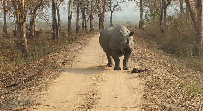 Photos of Kaziranga National Park by Amrita Kapoor