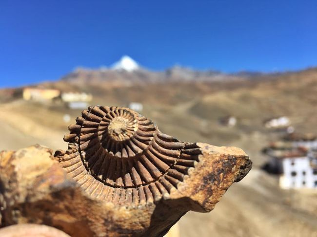 Spiti Valley is theFossil park of the Himalayas.
