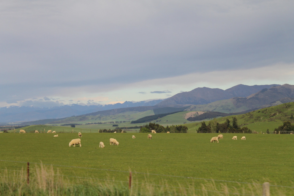 New Zealand Without a Car- Travel Blog- Guest Post