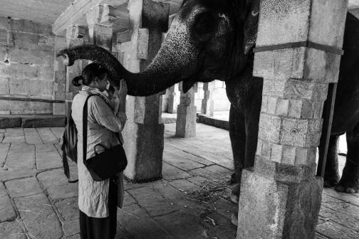 Photos of With Lakshmi, the elephant! 1/1 by Keerti Singh