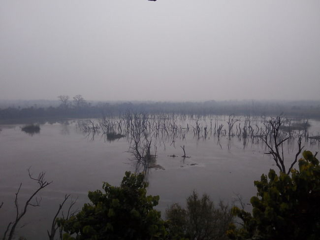 The Call of the Wild at Dudhwa National Park