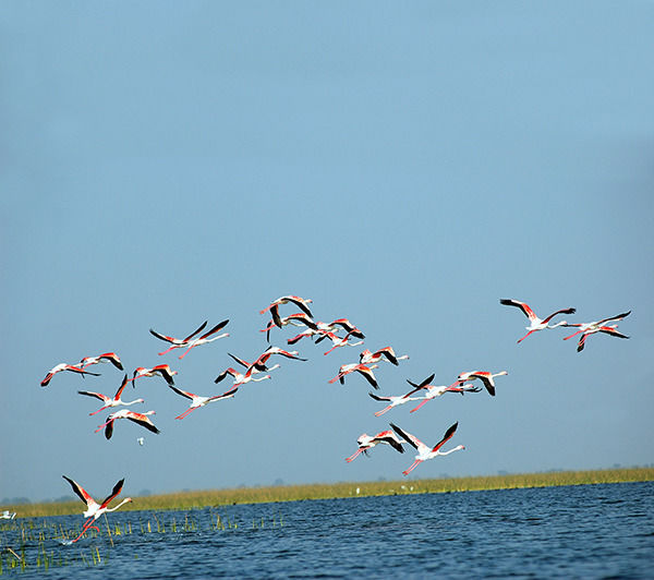 Stunning Bird Sanctuaries In Gujarat That Are Every Birdwatcher's Dream Destinations