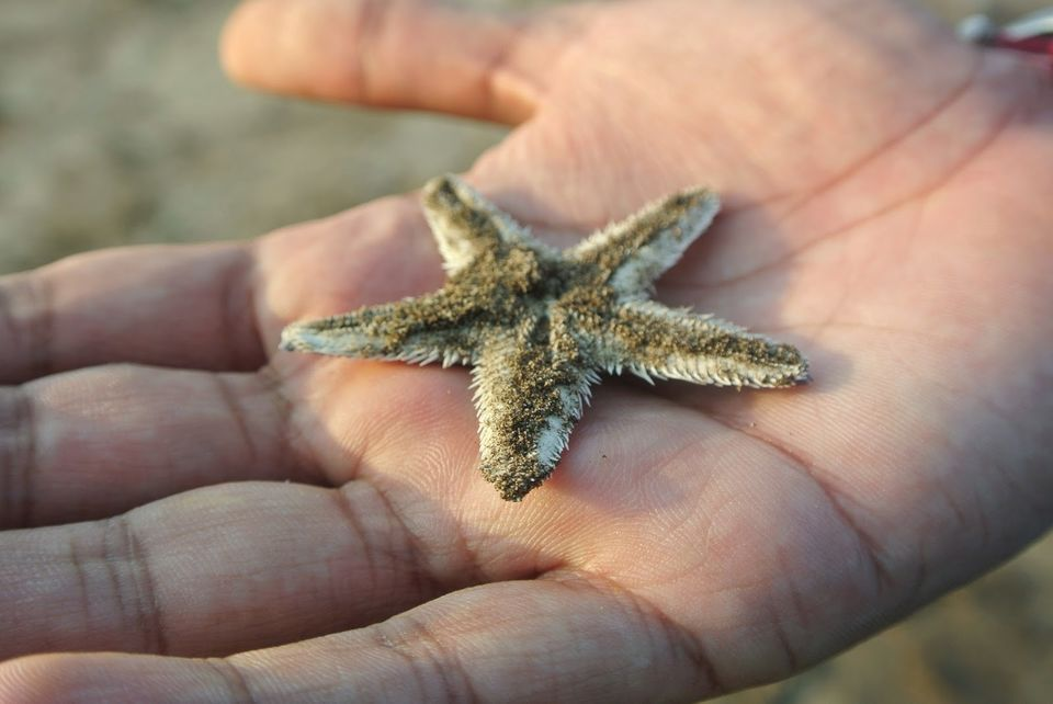 Photo of Thousands stars on the sand - Diveagar by Abhimanyu - @yatripandit