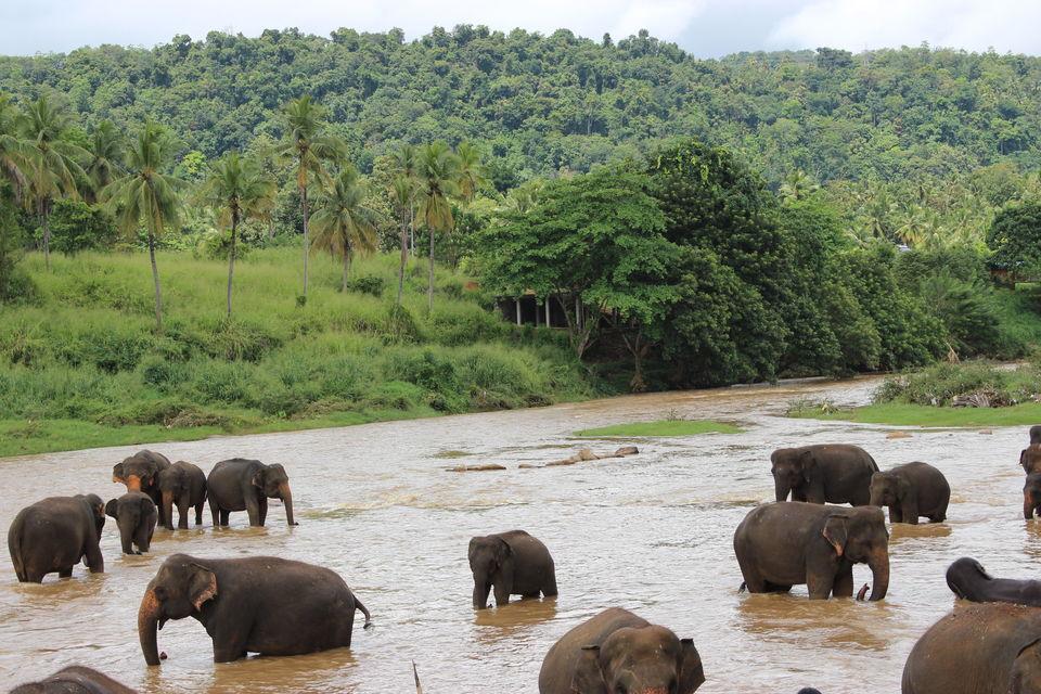 Explore Kandy, Sri Lanka