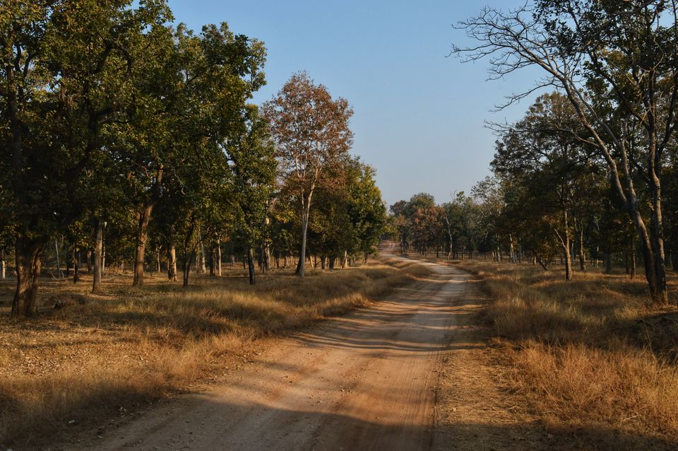 Another Reason to Visit Pench National Park and It's Not the Tigers!