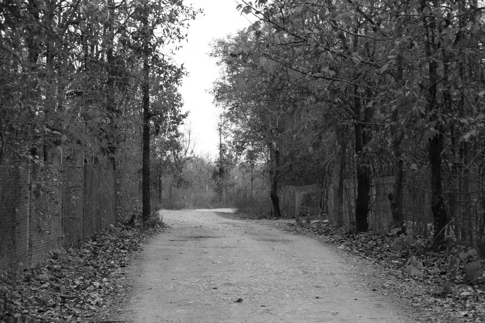 Safari – Pench Wildlife Sanctuary, Madhya Pradesh