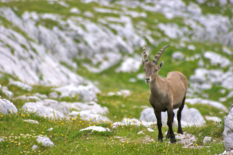 Pin Valley National Park Manali Himachal Pradesh Itinerary ...