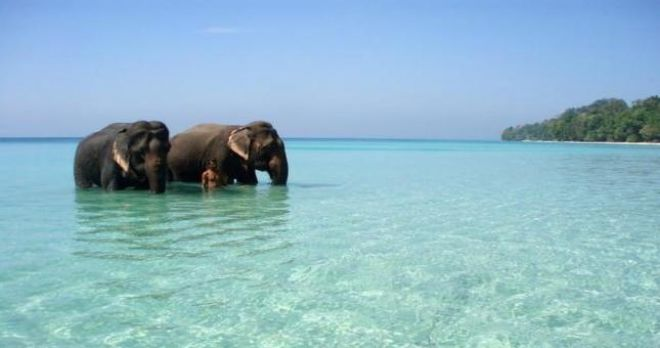 Photos of Elephant Beach 4/7 by Charu Mittal