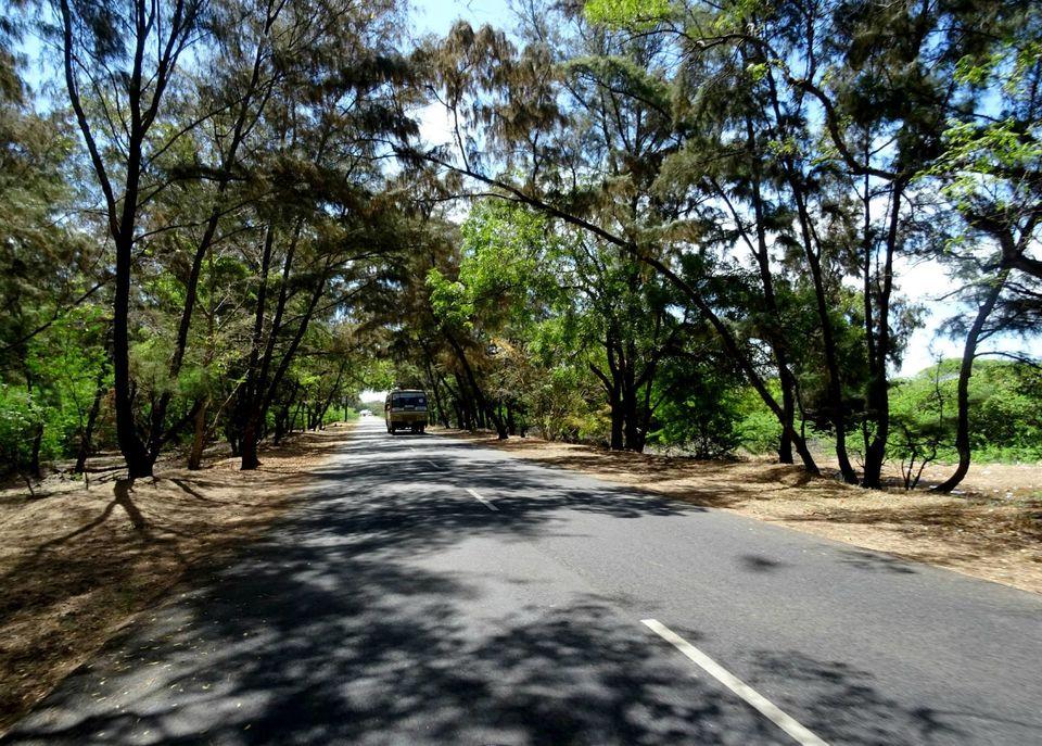 Photos of On the way to Danushkodi from Rameshwaram 1/26 by Sajna Ali