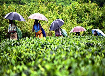 most rainy area in india