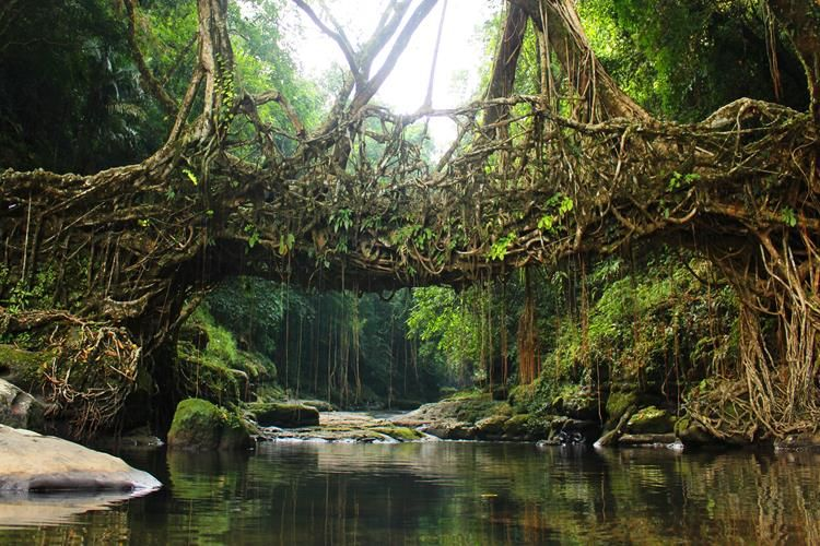 Forests in India to escape for healing yourself