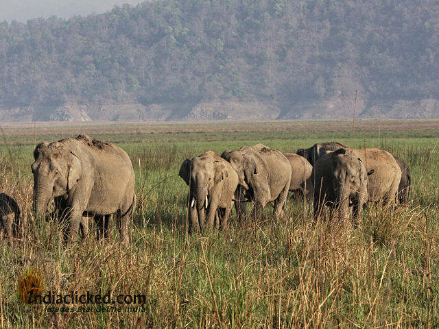 Photos of A Photographer's Travel Tales at Corbett National Park, India 1/5 by Somesh Goyal