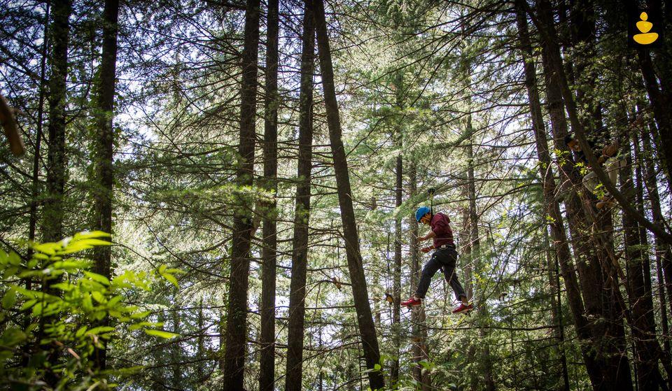 best treehouse stay in Himachal Pradesh