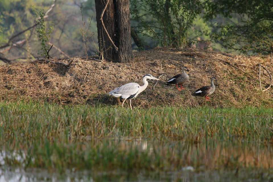 Photos Of Keoladeo National Park Bharatpur Nature Birds And Colors 1