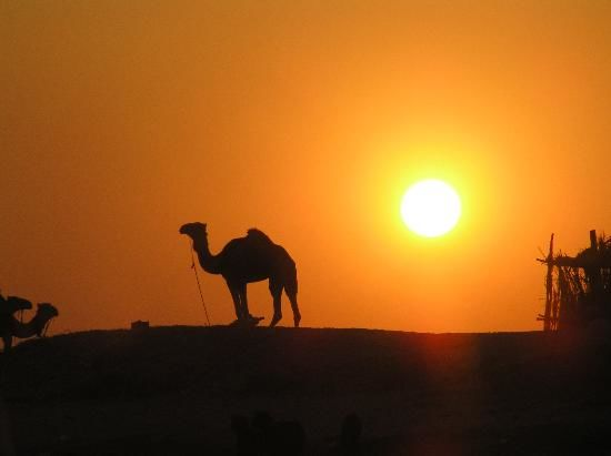Photos of Camel Ride 1/3 by Fatema Diwan