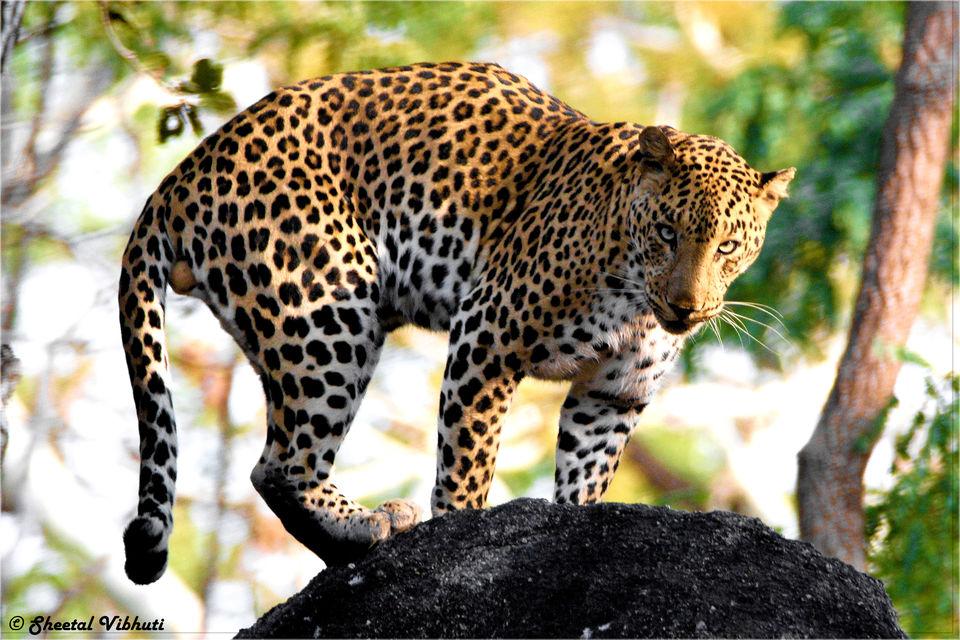 Photo of Take a Virtual tour to Mowgli's land -Pench National Park 3/30 by Sheetal Vibhuti escapingsoul.in