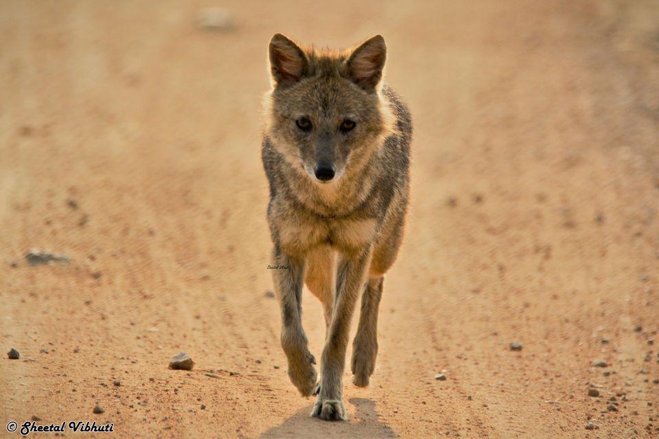 Photo of Take a Virtual tour to Mowgli's land -Pench National Park 5/30 by Sheetal Vibhuti escapingsoul.in