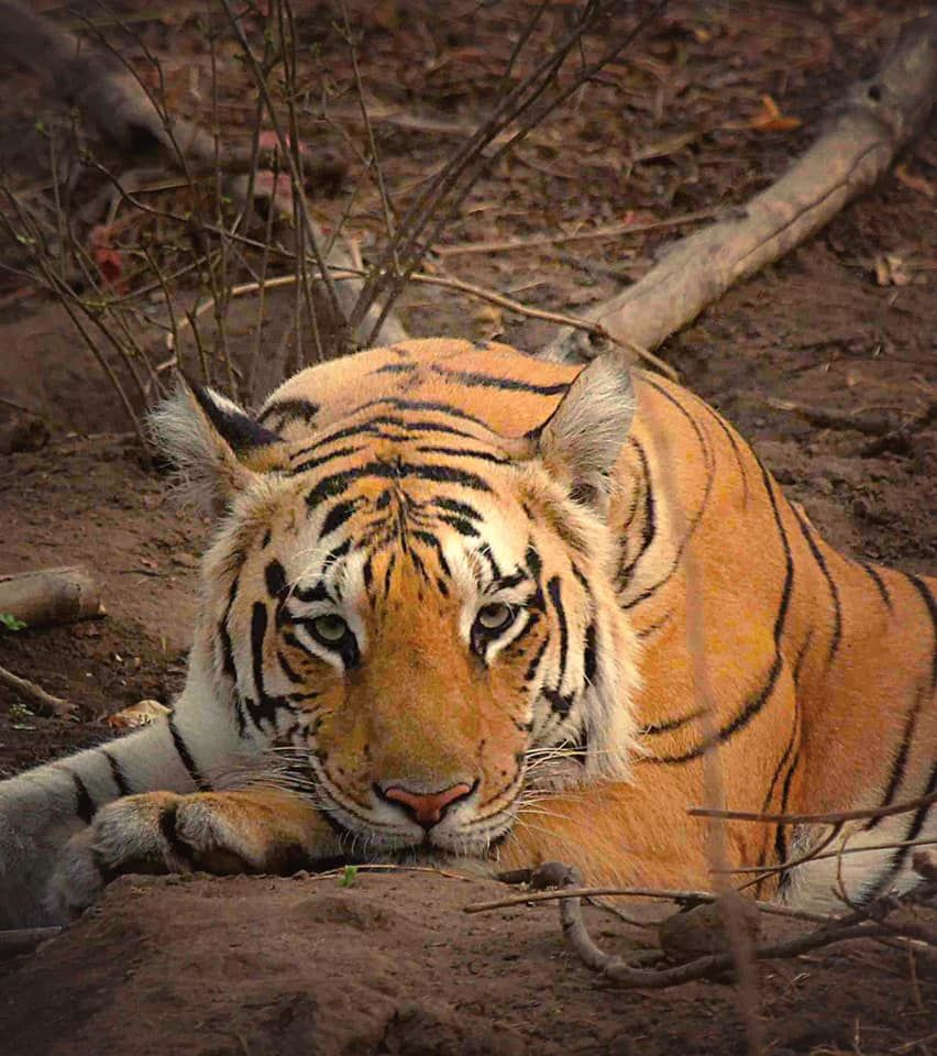 Photo of Take a Virtual tour to Mowgli's land -Pench National Park 1/30 by Sheetal Vibhuti escapingsoul.in