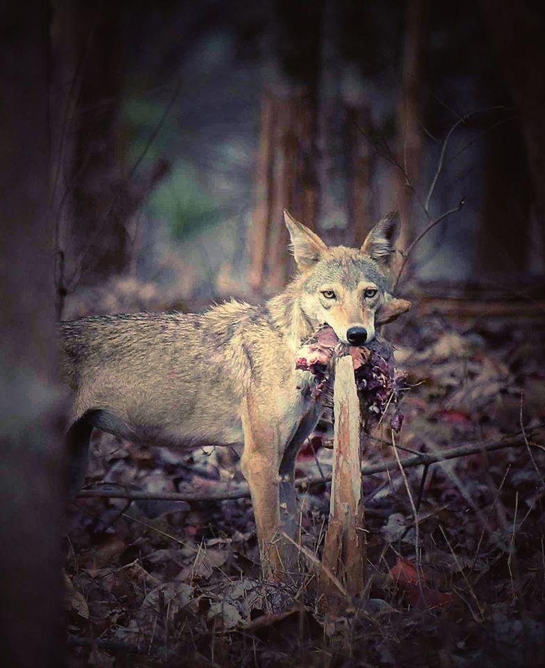 Photo of Take a Virtual tour to Mowgli's land -Pench National Park 7/30 by Sheetal Vibhuti escapingsoul.in