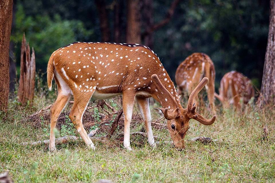 Photo of Take a Virtual tour to Mowgli's land -Pench National Park 11/30 by Sheetal Vibhuti escapingsoul.in