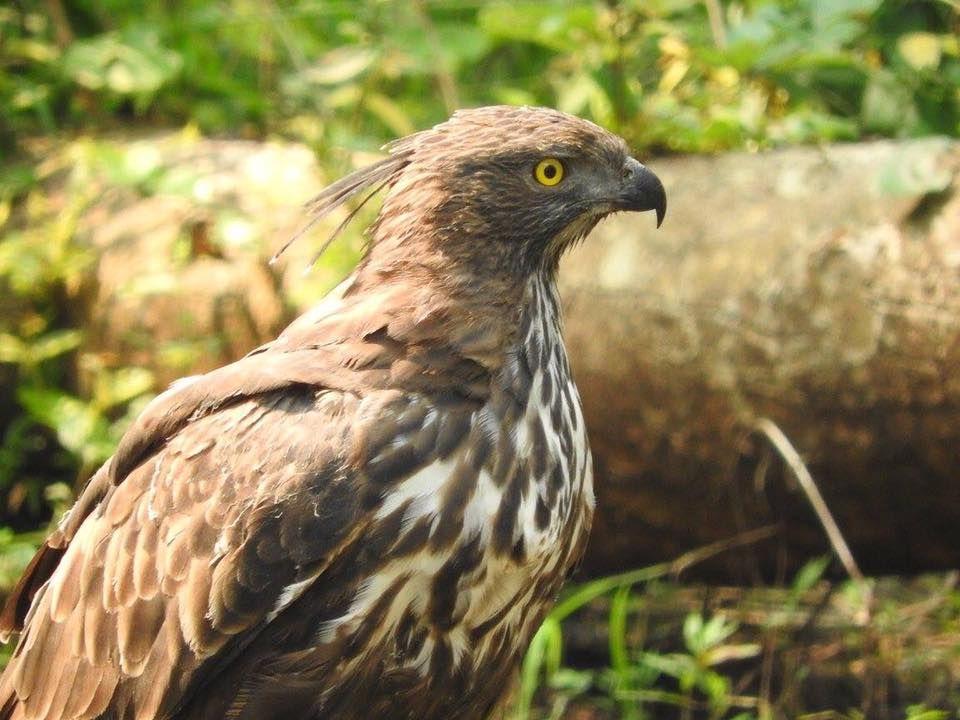 Photo of Take a Virtual tour to Mowgli's land -Pench National Park 16/30 by Sheetal Vibhuti escapingsoul.in