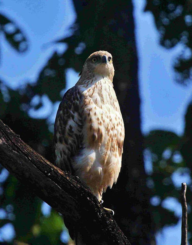 Photo of Take a Virtual tour to Mowgli's land -Pench National Park 17/30 by Sheetal Vibhuti escapingsoul.in